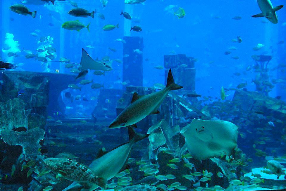 Underwater dinner. , United Arab Emirates