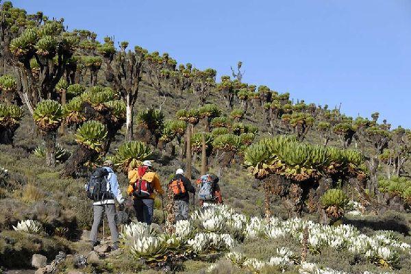 Mount Kenya , Trekking in Mount Kenya National Park , Kenya