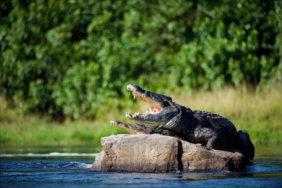 Il lago Vittoria , Vista sul lago Vittoria , Kenya