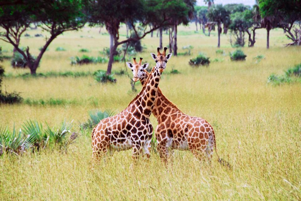 Il lago Vittoria , Kenya