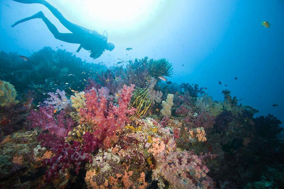 La plongée , Mur de corail aux Fidji , Fidji