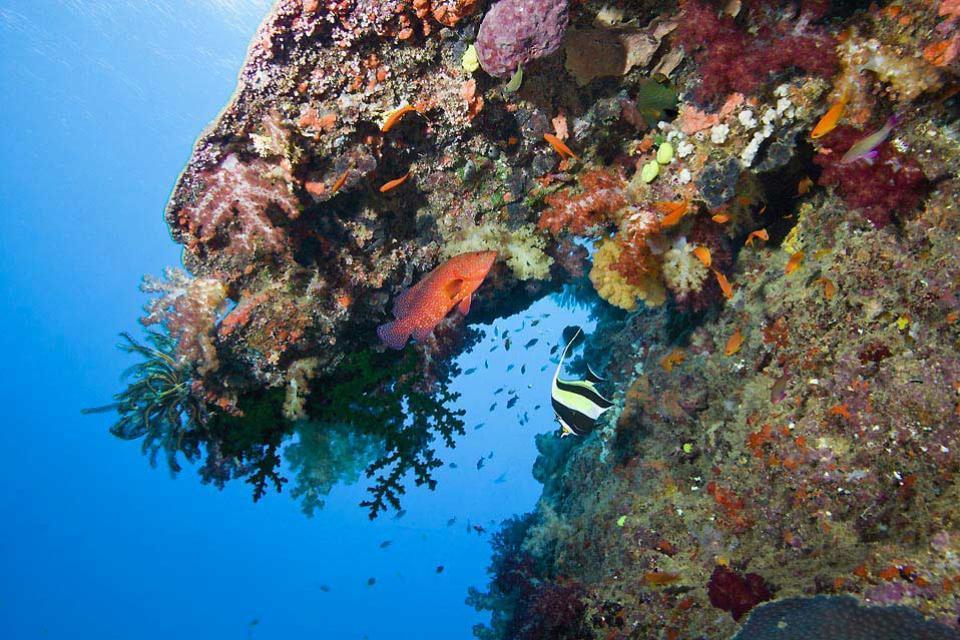 La plongée , Lagons et coraux aux Fidji , Fidji