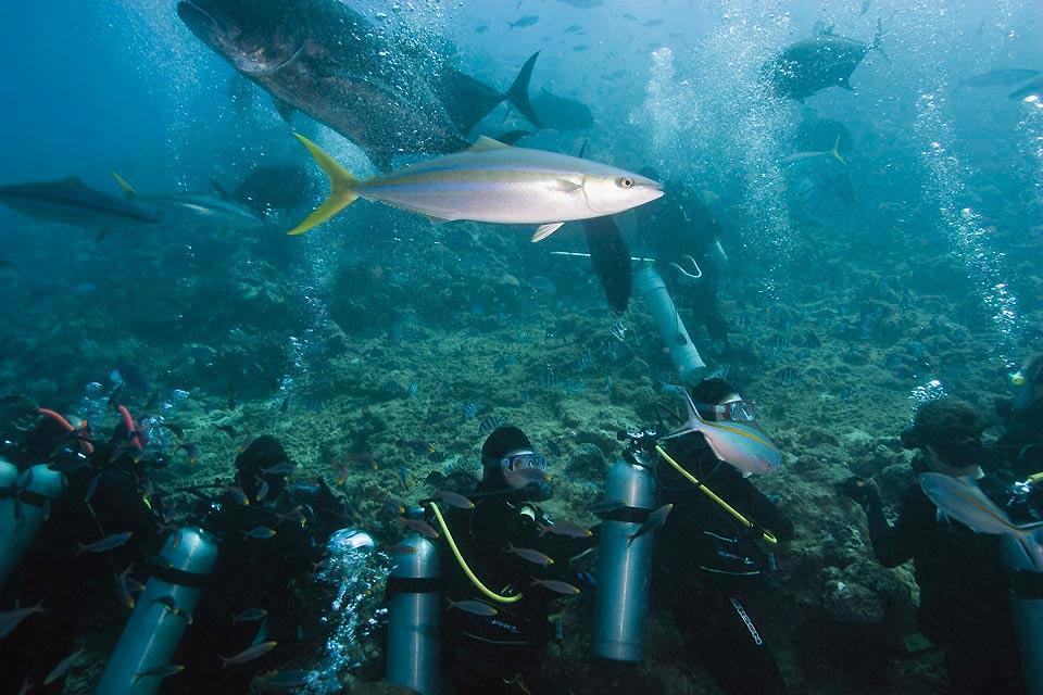 La plongée , Plongée à Veti Levu , Fidji
