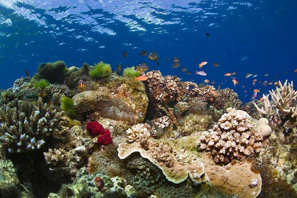 La plongée , Fidji