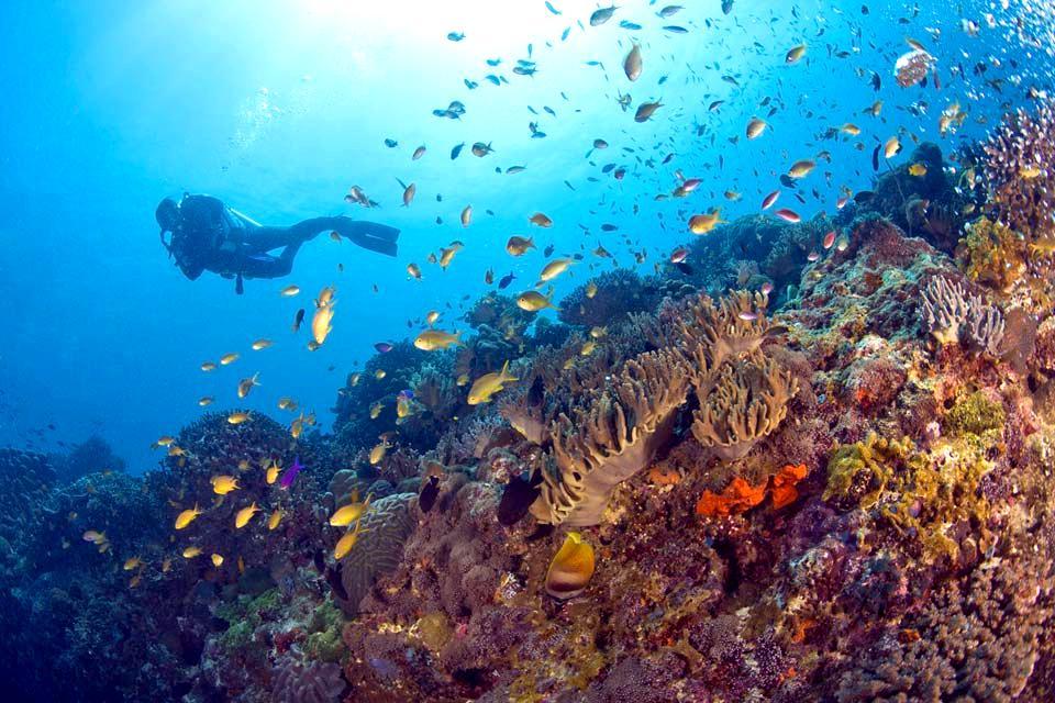 Negros , Los fondos marinos , Filipinas