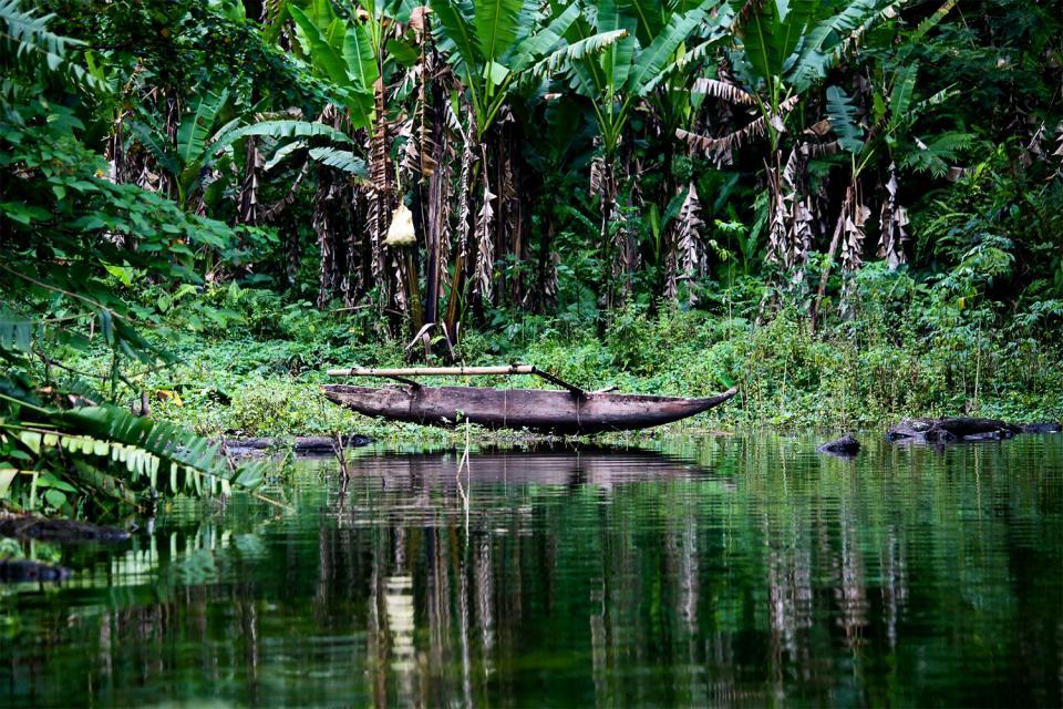 Negros , Los bosques de Negros , Filipinas