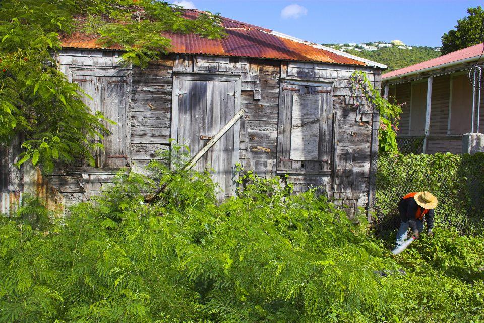 La exuberante vegetación , Bermudas