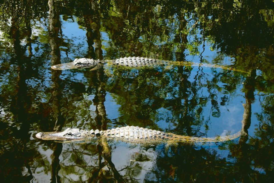 Everglades National Park , United States of America