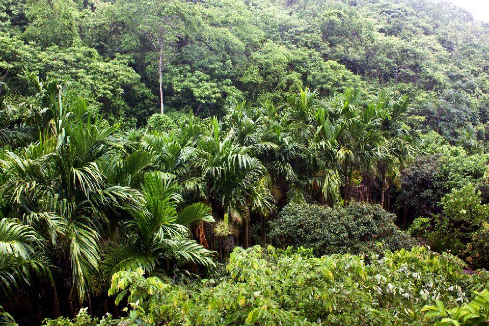 L'Amazonie , La canopée , Brésil