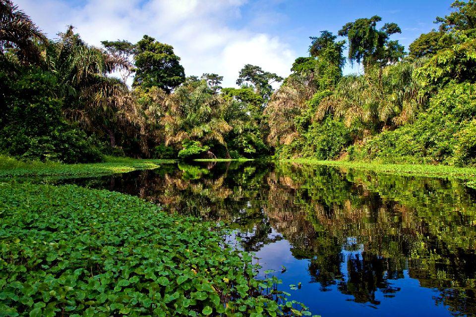 L'Amazonie , La planète des singes , Brésil