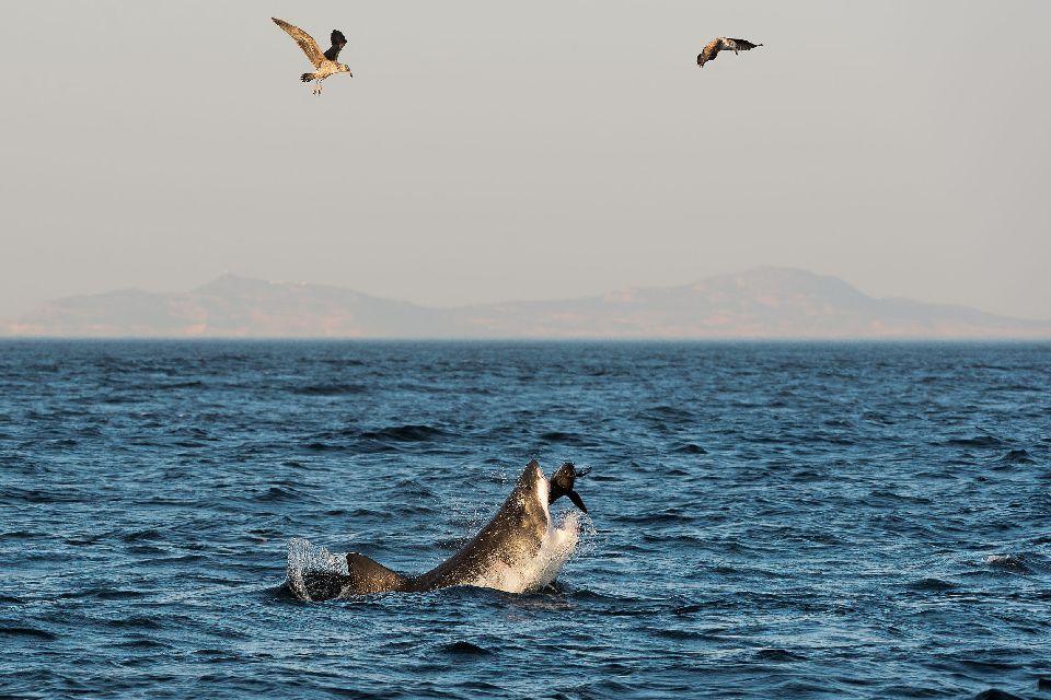 Le Parc Marin de la grande Baie Australienne , Le parc marin de la grand baie australienne , Australie
