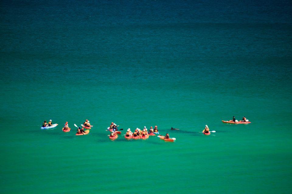 Le Parc Marin de la grande Baie Australienne , Le parc marin de Shark Bay , Australie
