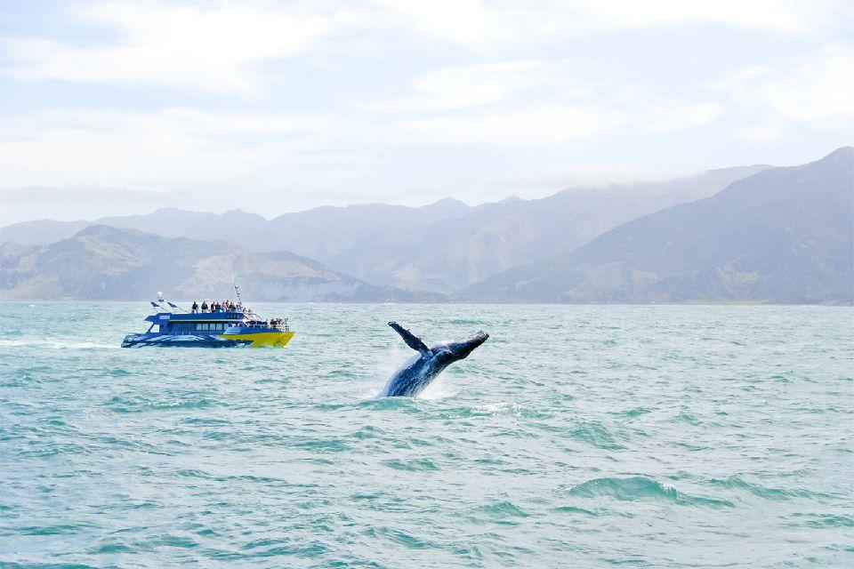 Le Parc Marin de la grande Baie Australienne , La baleine de Minke , Australie