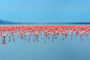 Image result for kenya wasini island