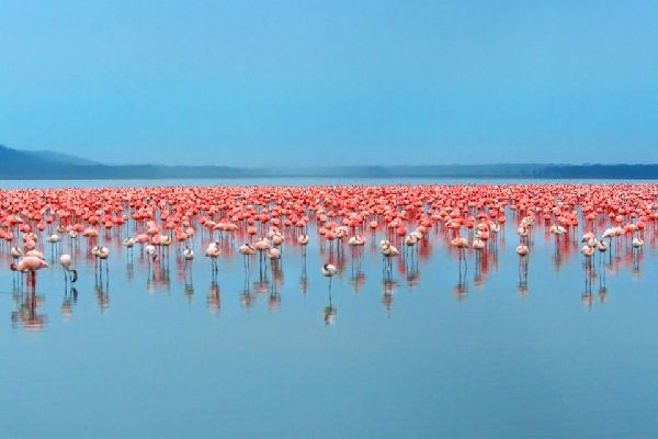 The Rift Valley Lakes , Flamingoes, the Rift Valley Lakes , Kenya