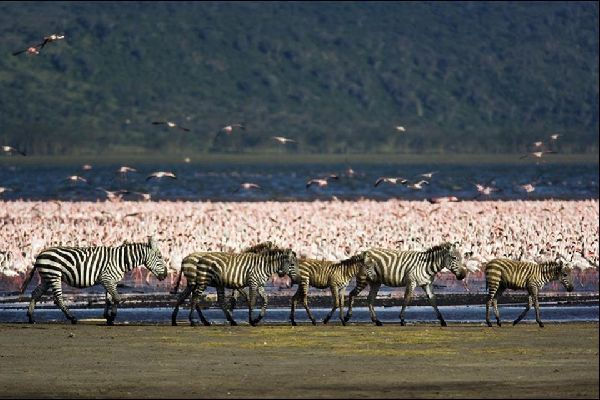 The Rift Valley Lakes , Lake Nakuru , Kenya
