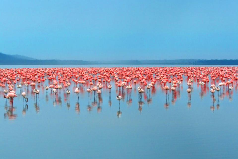 I laghi della Rift Valley , I laghi della Valle di Rift , Kenya