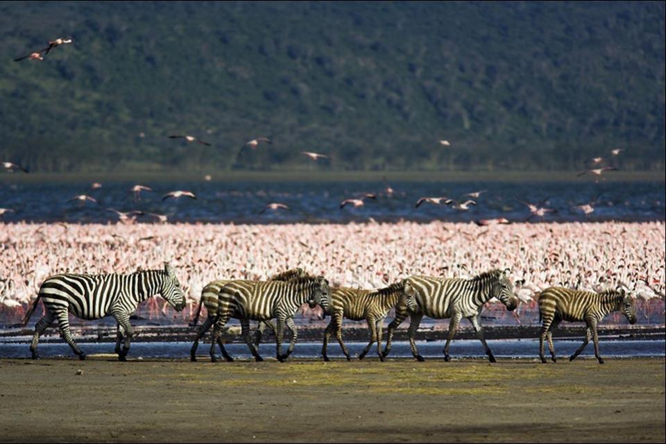 I laghi della Rift Valley , Il lago Nakuru , Kenya