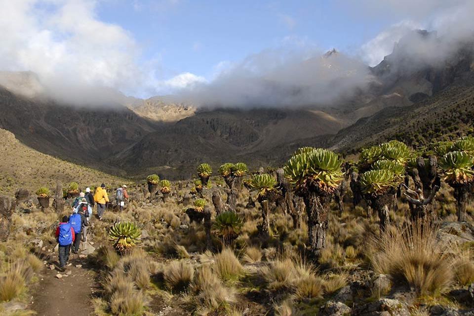 Meru and Samburu Reserves and Mount Kenya National Park , Trekking in Mount Kenya National Park , Kenya