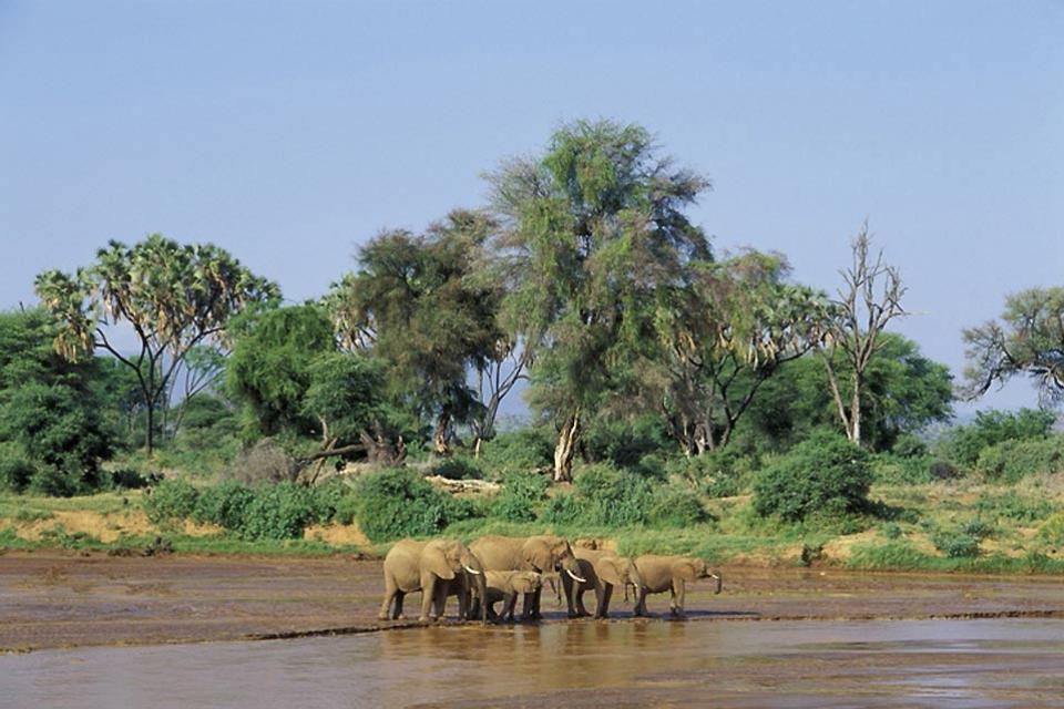 Meru and Samburu Reserves and Mount Kenya National Park , Elephants on the riverbanks , Kenya