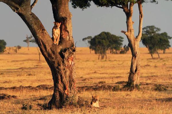 The Masai Mara Reserve , Maasai Mara , Kenya