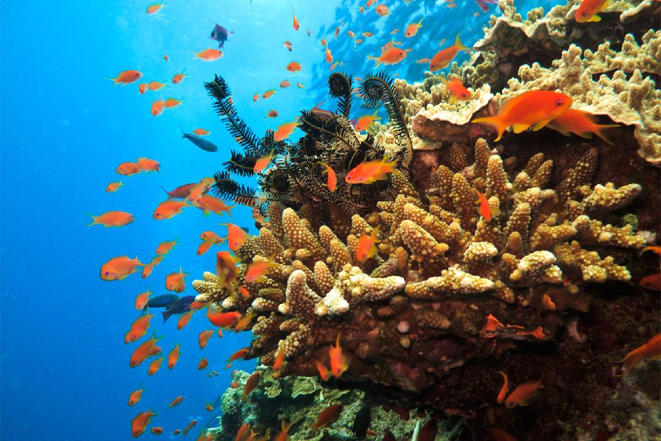 La barriera corallina , Bermuda