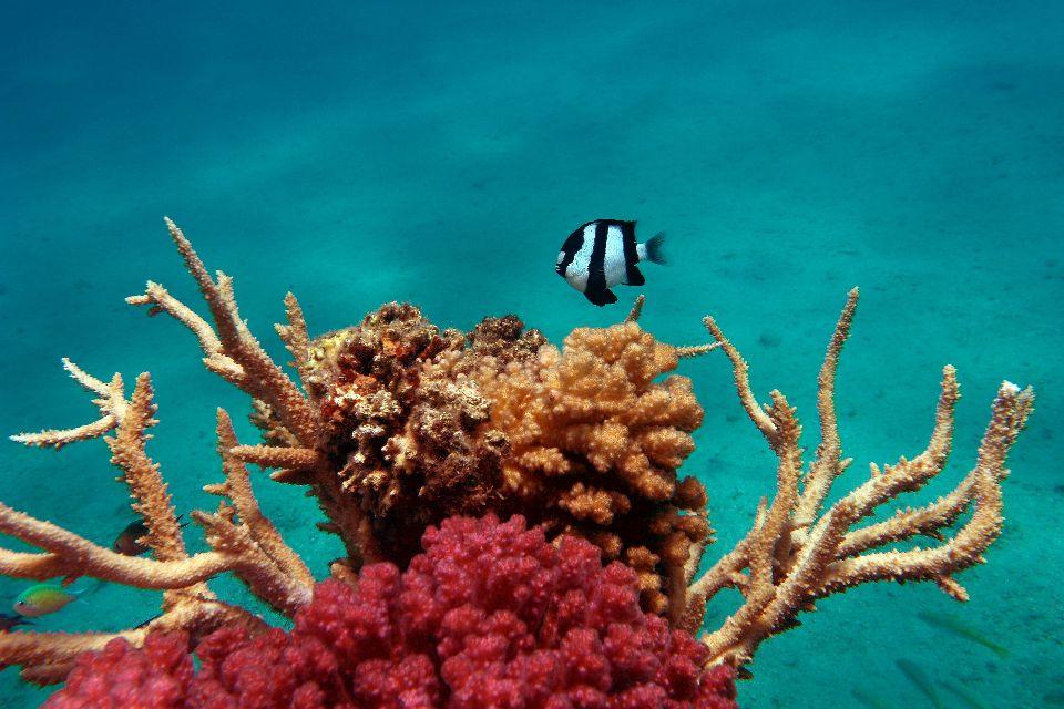 La barriera corallina , La barriera corallina, Bermuda , Bermuda
