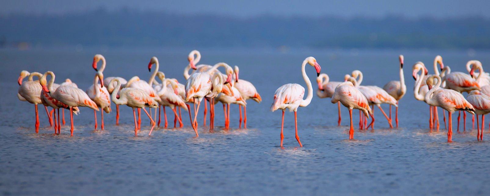 , La reserva ornitológica de Pulicat, Los parques y las reservas naturales, Tamil Nadu