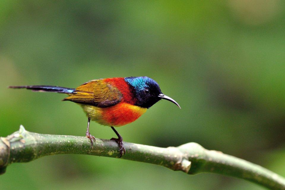 , La réserve ornithologique de Pulicat, Les parcs et les réserves, Tamil Nadu