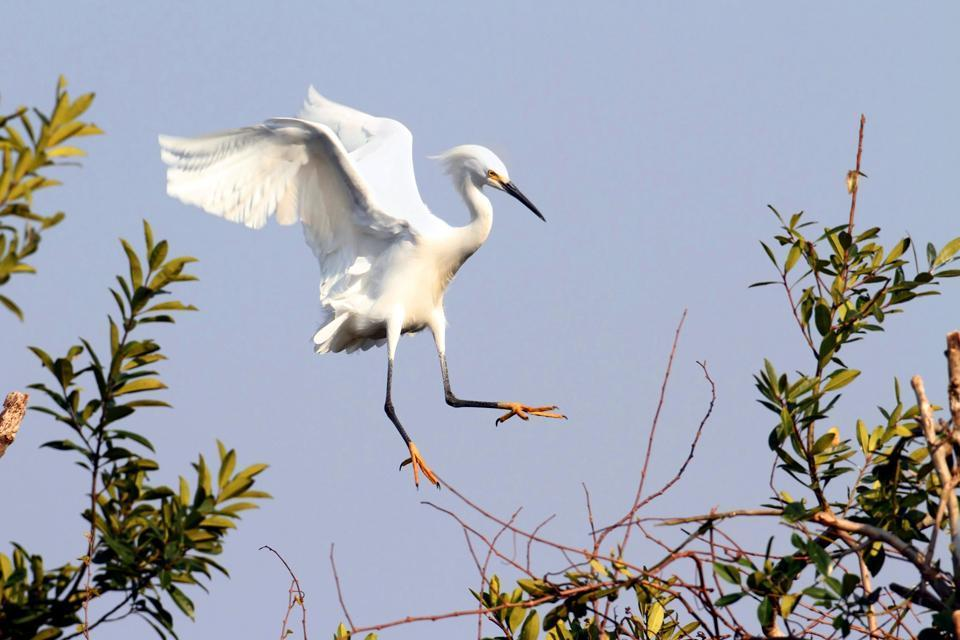 Key Biscayne National Park , Everglades National Park , United States of America