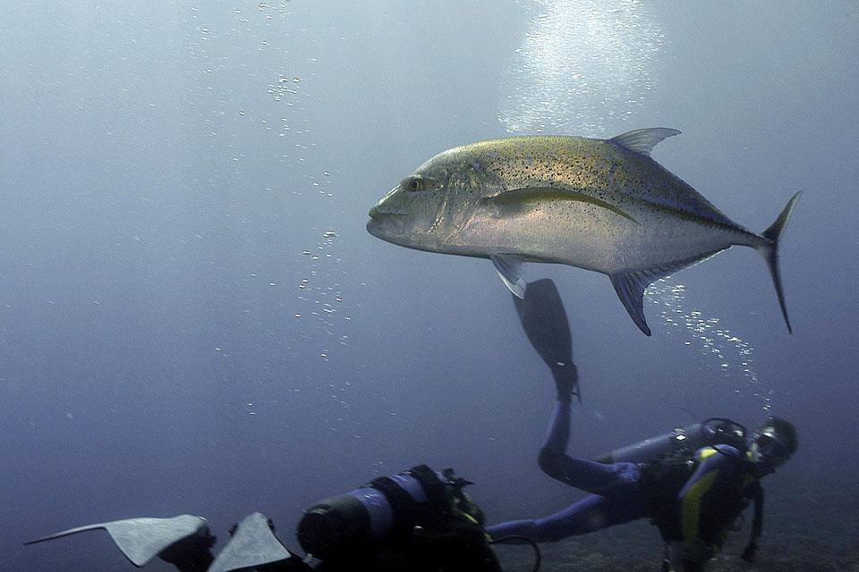 0 , Polinesia