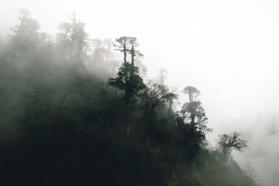 Les paysages, bhoutan, asie, flore, végétation, plante, nature, forêt, bois
