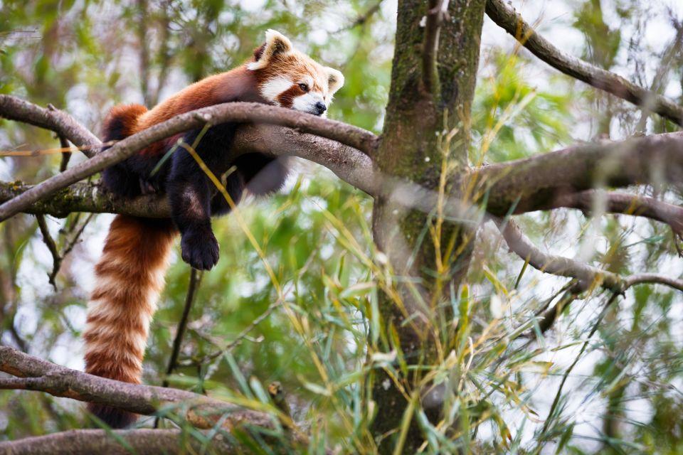 Les paysages, bhoutan, asie, flore, végétation, plante, nature, forêt, bois, panda roux
