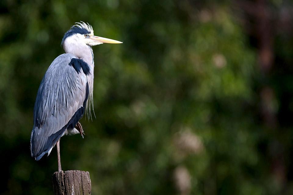 Les oiseaux de la péninsule de Courlande , Lithuania