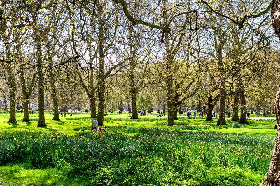 Green Park, le parc chic de Londres , Green Park à Londres en Angleterre , Royaume-Uni