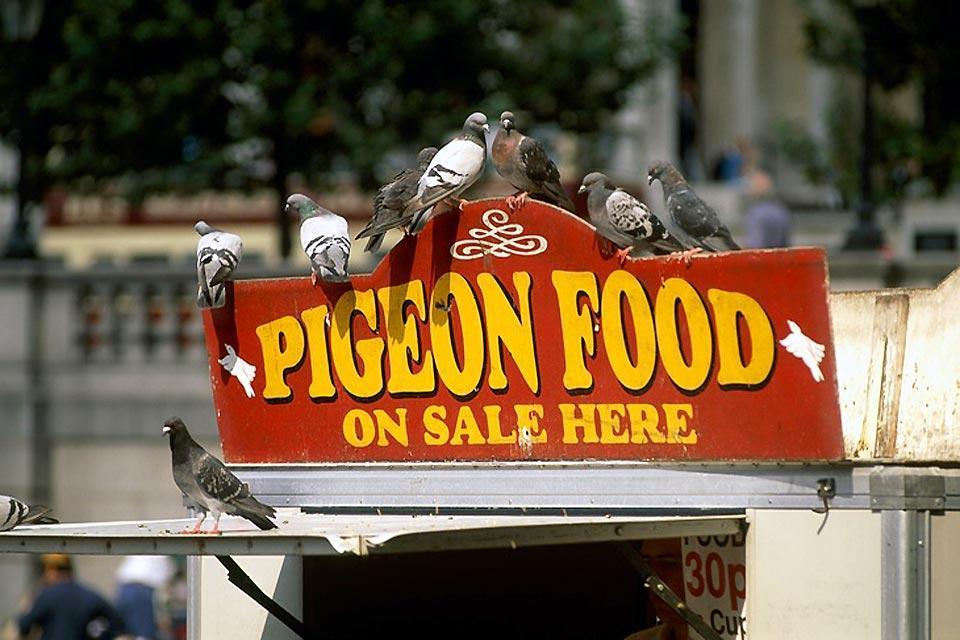 Saint-James Park, zoo londonien à ciel ouvert , Étal de nourriture pour pigeons , Royaume-Uni