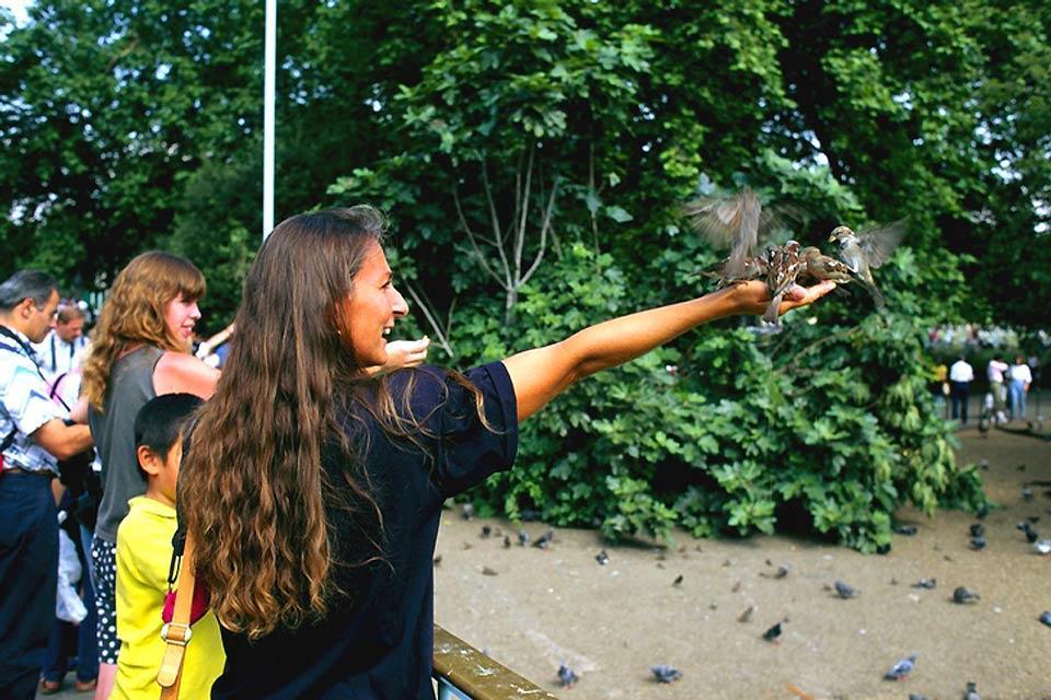 Saint-James Park, zoo londonien à ciel ouvert , oiseaux à St. James's Park , Royaume-Uni