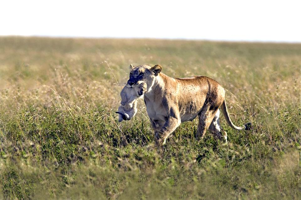 Meru National Park , A zebra in Meru National Park , Kenya