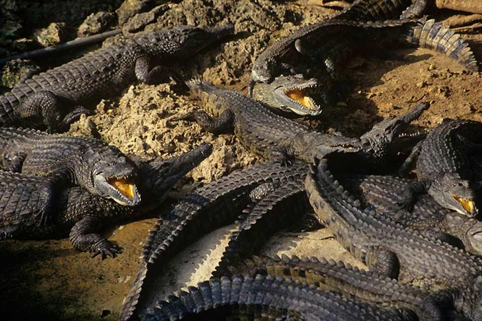 Meru National Park , Crocodiles, Meru National Park , Kenya