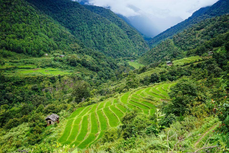 Les paysages, bhoutan, agriculture, plaine, asie