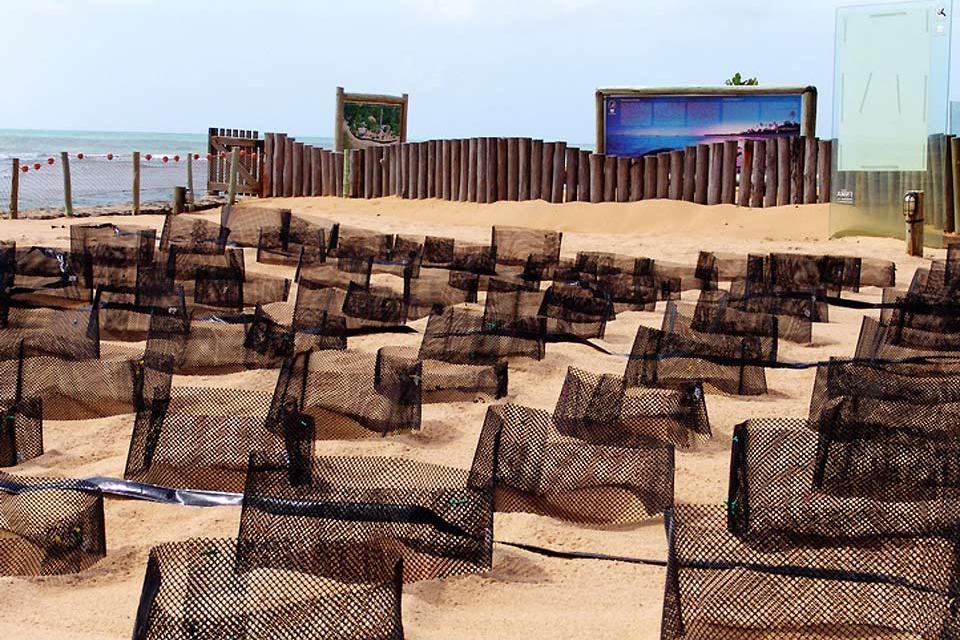 Le projet Tamar de Praia do Forte , Un projet unique , Brésil