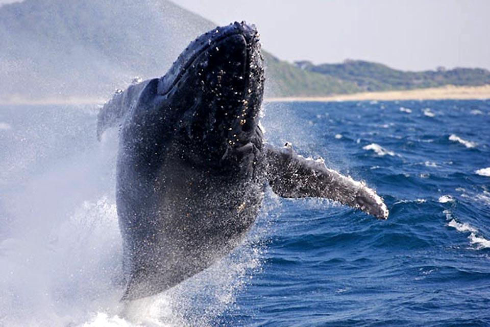 Le balene , La balena in Sudafrica , Sudafrica