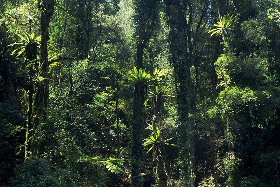 Les randonnées du Queensland , Lamington National Park , Australie