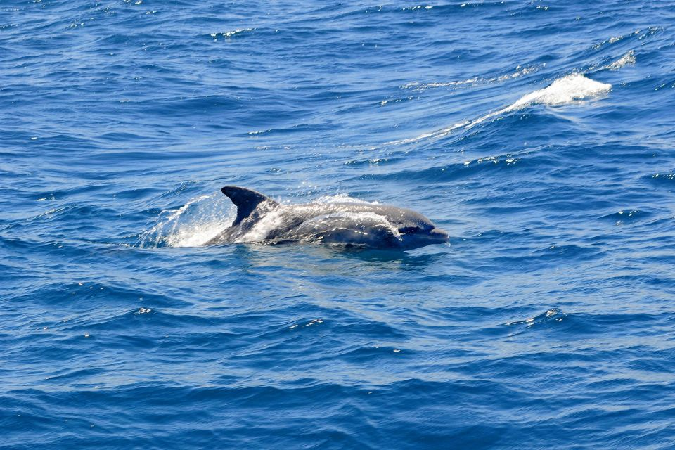 A dolphin, The whales of the Samana peninsula, The fauna and flora, Dominican Republic