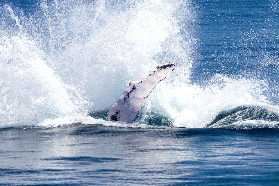 , Le balene della penisola di Samana., La fauna e la flora, Repubblica Dominicana