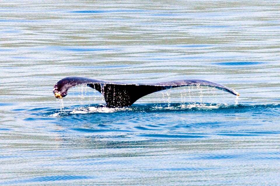 , The whales of the Samana peninsula, The fauna and flora, Dominican Republic