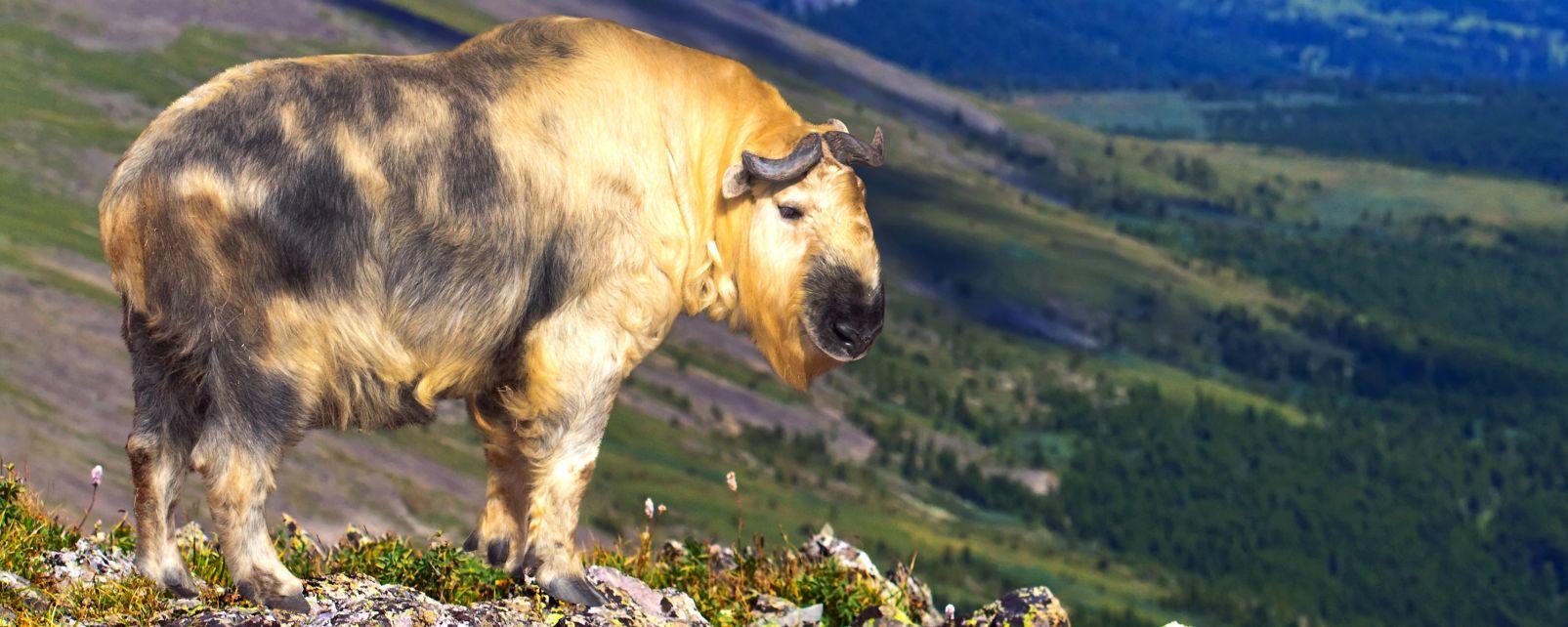La fauna delle montagne e la giungla bhutan - Immagini da colorare delle montagne ...