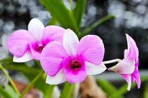 La flore burundaise , Burundi