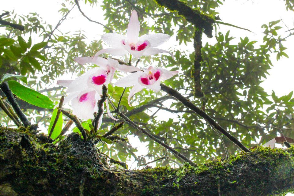 La faune et la flore, bhoutan, asie, flore, végétation, plante, nature, orchidée, fleur