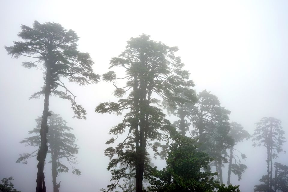 La faune et la flore, bhoutan, asie, flore, végétation, plante, nature, forêt, arbre, conifère